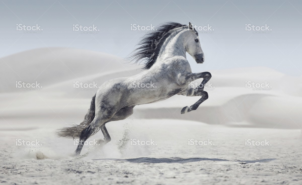 stock-photo-43576434-picture-presenting-the-galloping-white-horse.jpg